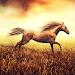 Download Horse Pictures Live Wallpaper APK