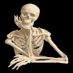 Download Human Anatomy APK